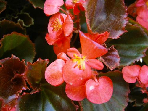 annual color