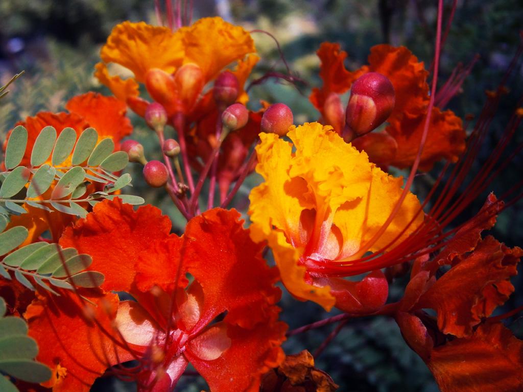 Perennial Plants Garden Center Nursery San Antonio